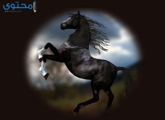 رمزيات حصان اسود
