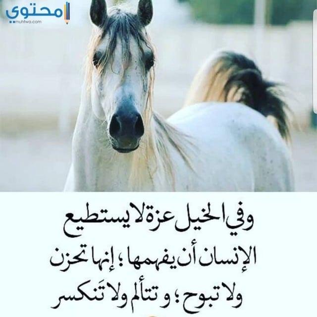 خيول مكتوب عليها