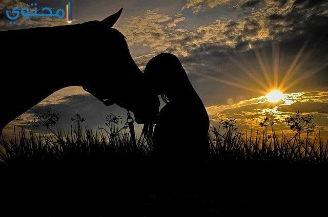 حصان حزين