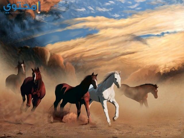 خيول جميلة