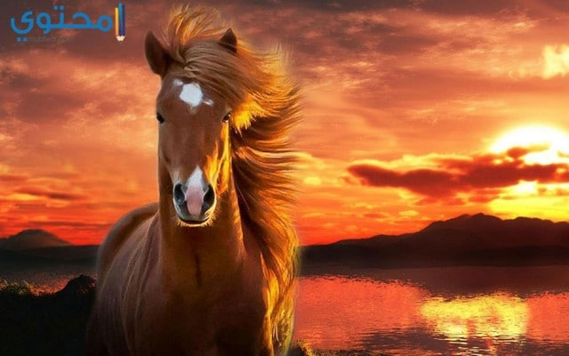 اجمل خلفيات خيول كيوت