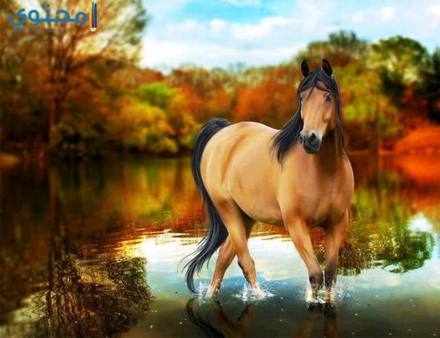 صور حصان جميل