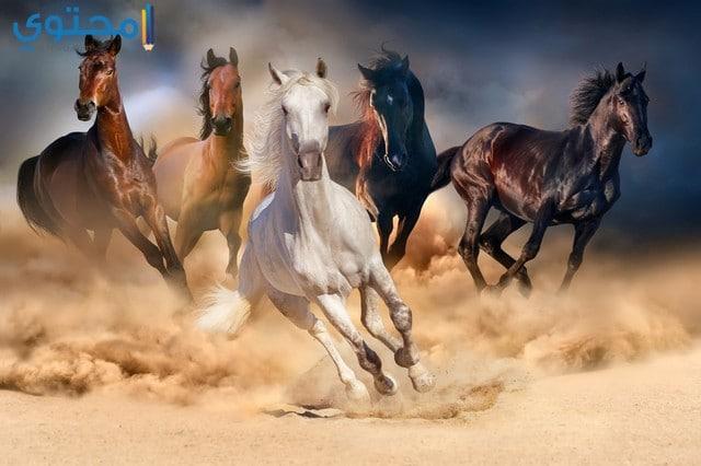 خلفيات احصنة كبيرة