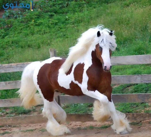 رمزيات خيول روعة