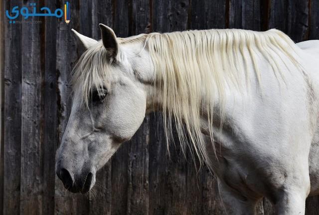 صور حصان حزين