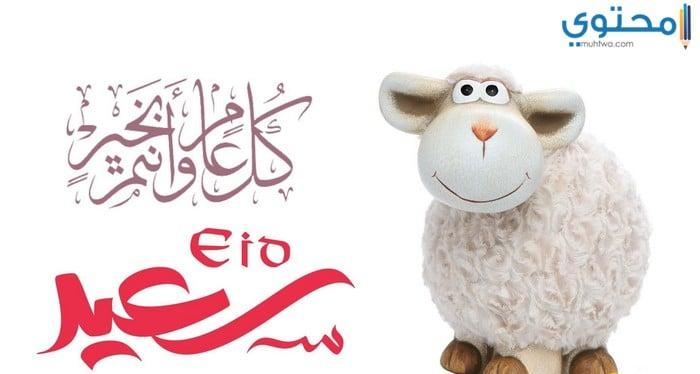 صور خروف العيد