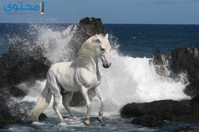 رمزيات وصور خيول 2018