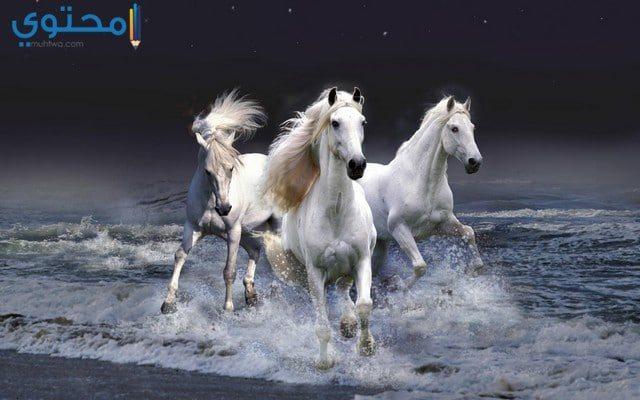 صور خيول بيضاء للفيس