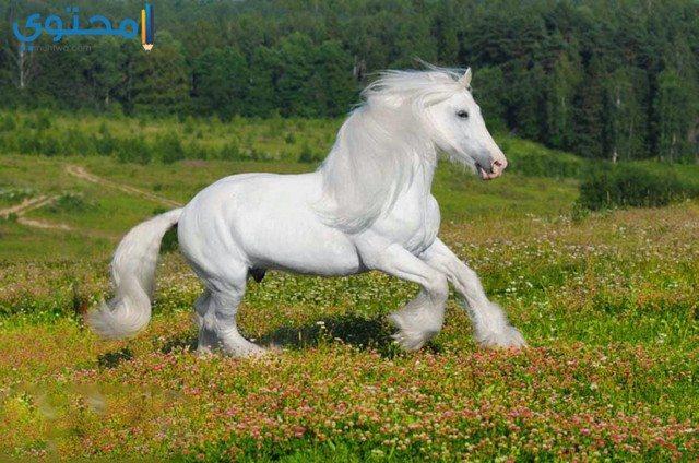 أحدث صور الخيول البيضاء 2018