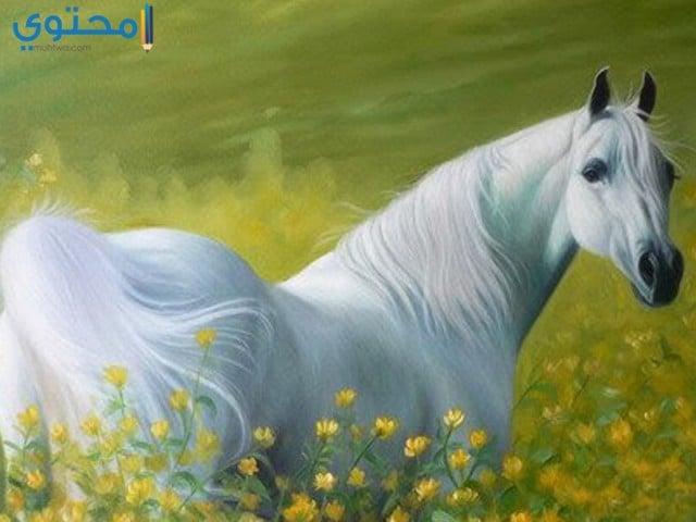 خلفيات حصان أبيض روعة