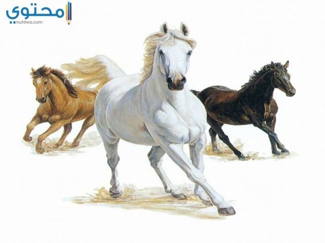 خلفيات خيول للموبايلات