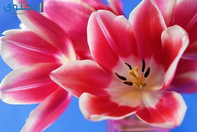 زهور جميلة