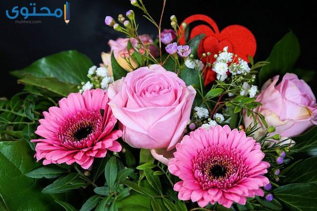 اجمل الورود الرومانسية
