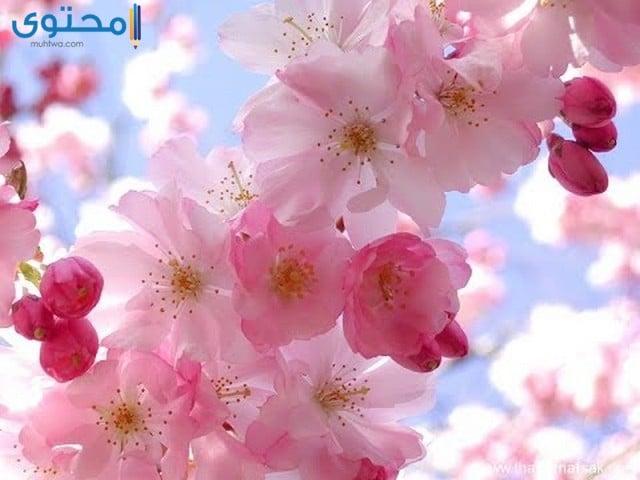 خلفيات ورود وزهور جميلة