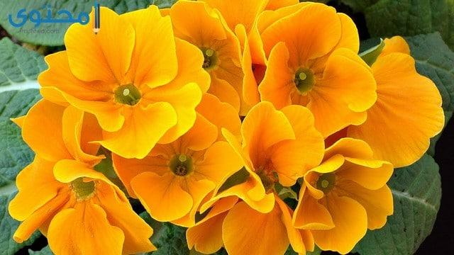 احلى الورود والزهور