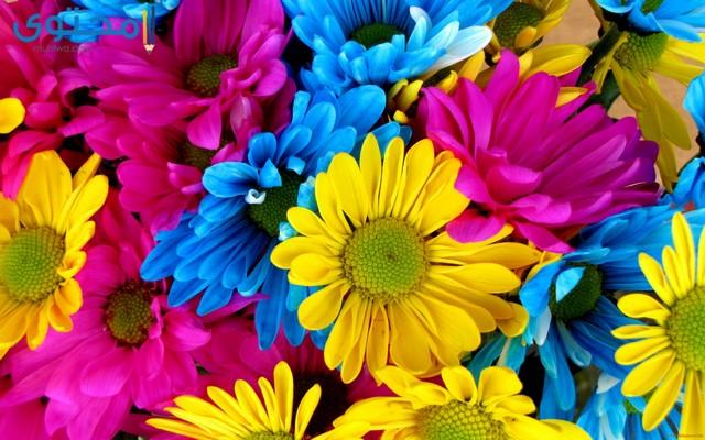 صور زهور وورود جميلة