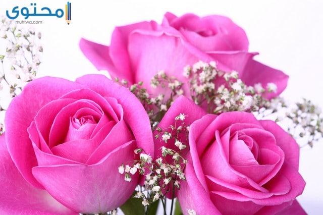 اروع الورود والزهور