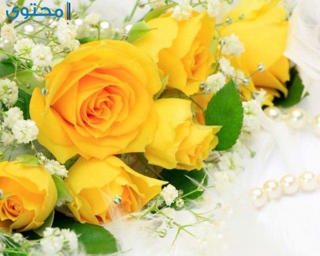 رمزيات زهور وورود