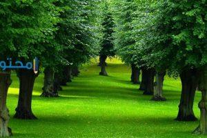 تفسير رؤية الأشجار فى المنام بالتفصيل