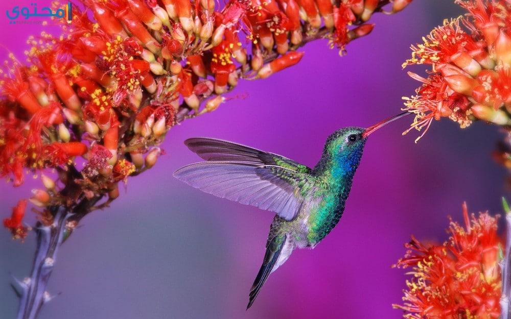 أجمل العصافير في العالم