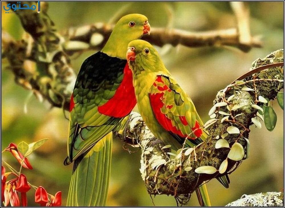 أجمل العصافير للفيس بوك