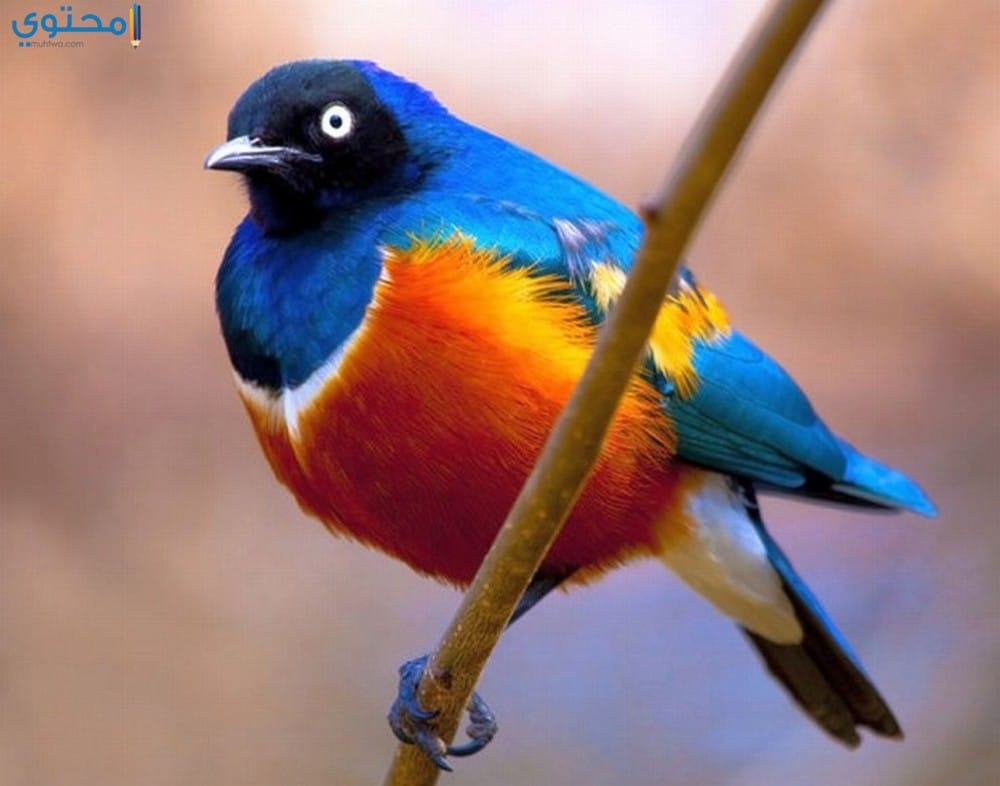 خلفيات وصور عصافير ملونة
