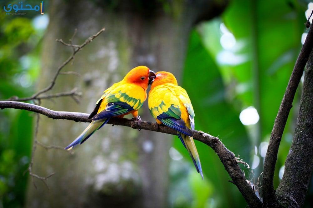 صور عصافير حديثة للفيس