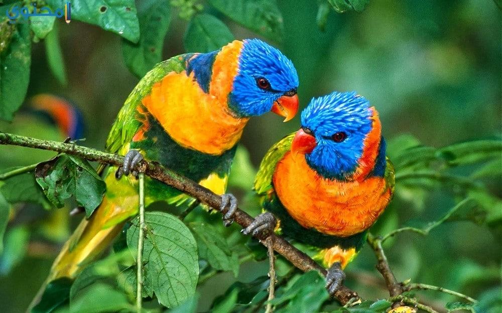 أجمل عصافير الحب