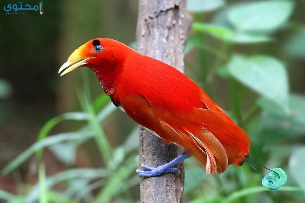 أحدث صور ورمزيات العصافير