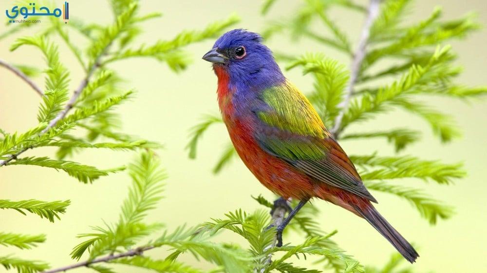 صور خلفيات عصافير رائعة