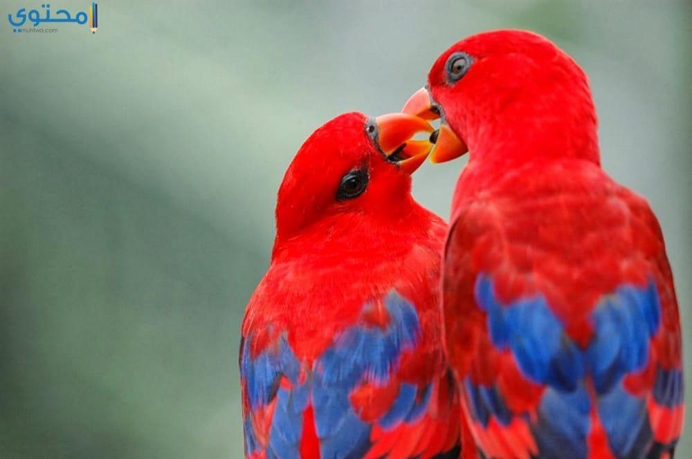 أجمل عصافير رومانسية