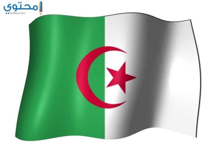 أجمل الصور المعبرة عن علم الجزائر