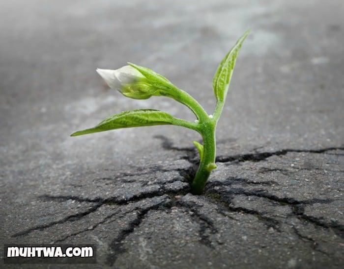 حكم وعبارات عن الأمل جديدة 2021 - موقع محتوى