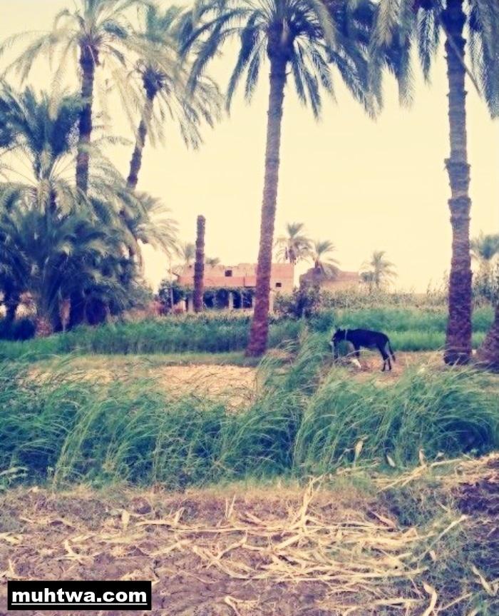 صور عن الريف