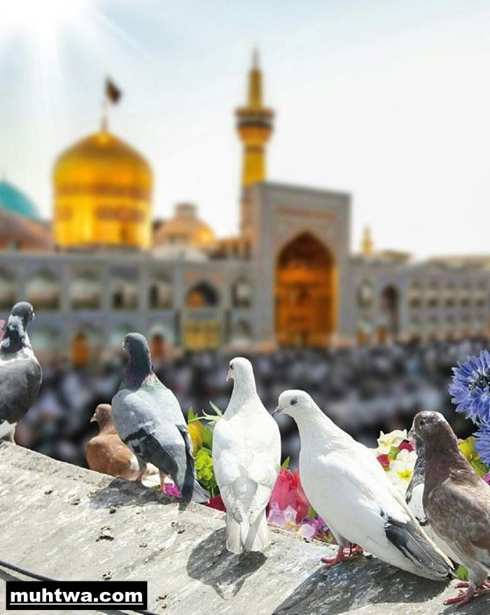 صور عن السلام