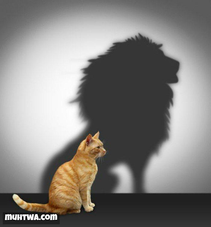 صور عن الشجاعة