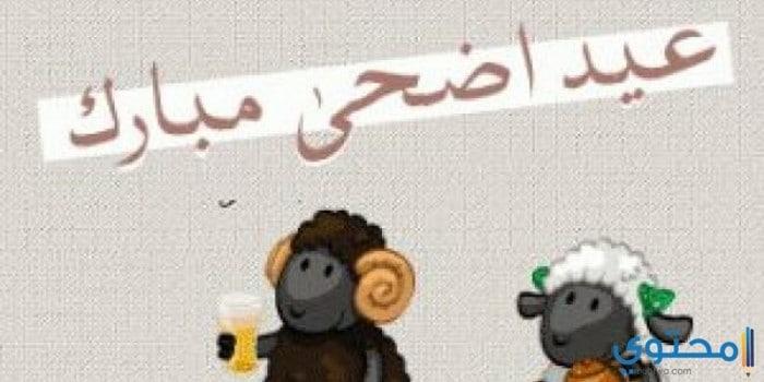 أفضل عبارات عيد الاضحى للتهنئة 2021 اجمل كلمات تهنئة العيد - موقع محتوى