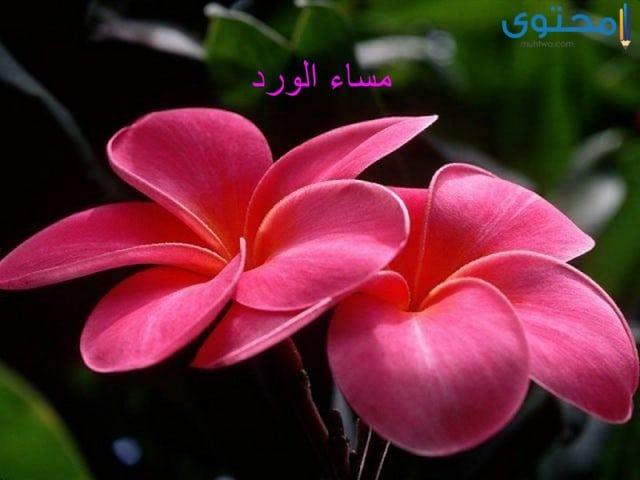 اجمل الصور للفيس بوك
