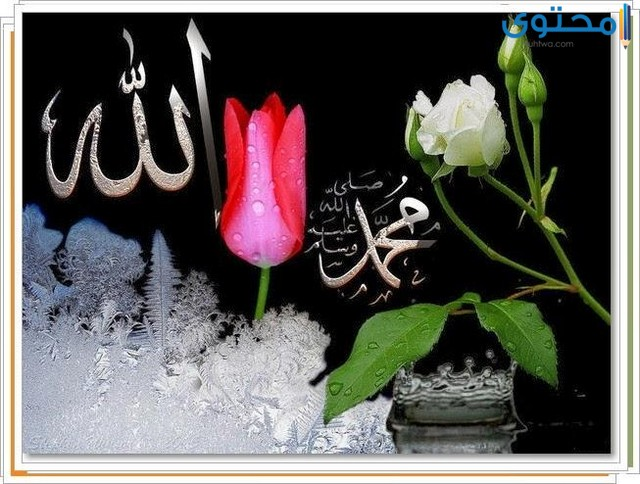 اجمل صور فيس بوك