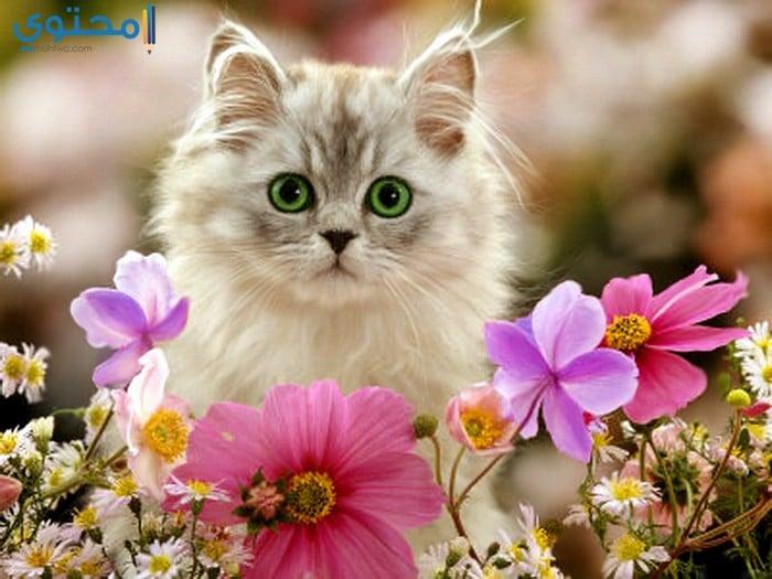 أروع الصور للقطط في العالم