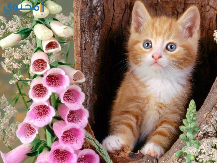 صور قطط حديثة للفيس وتويتر