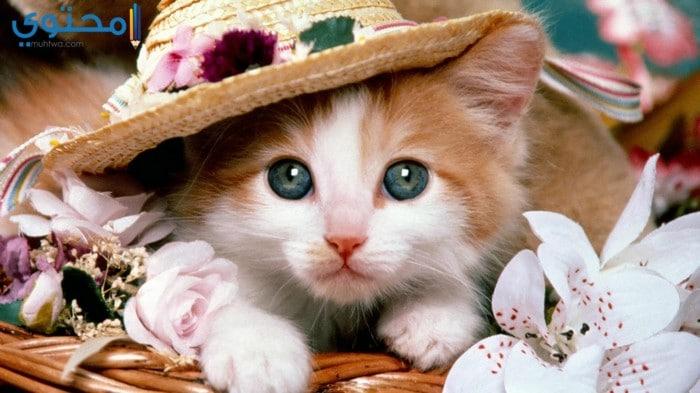 صور وخلفيات قطط جميلة