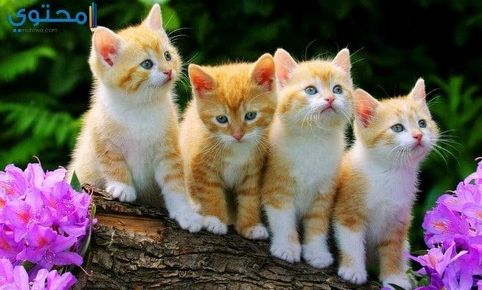 أجمل خلفيات القطط