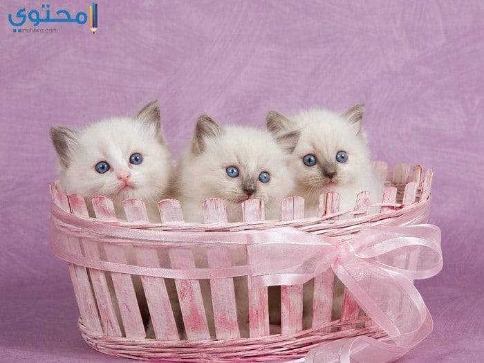 رمزيات قطط كيوت