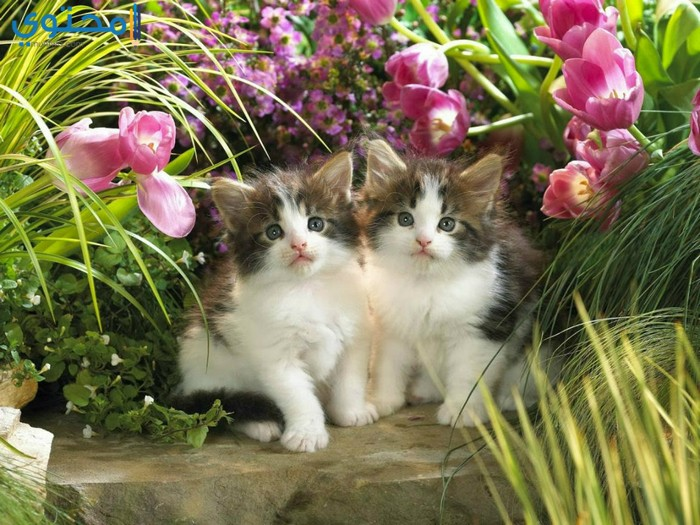 قطط جميلة مصورة