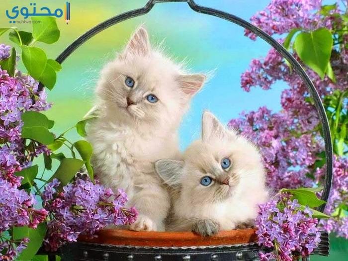 أجمل الصور للقطط في العالم