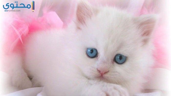 أحدث صور القطط