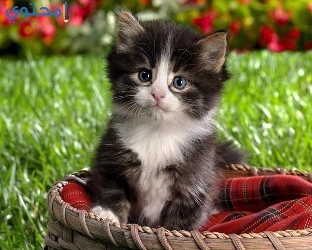 صور وخلفيات قطط