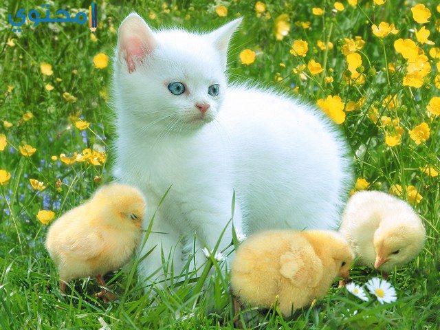 رمزيات قطط جميلة