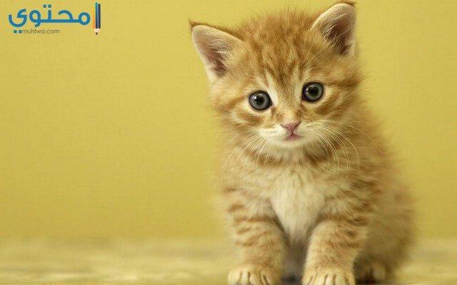أحلى قطط كيوت